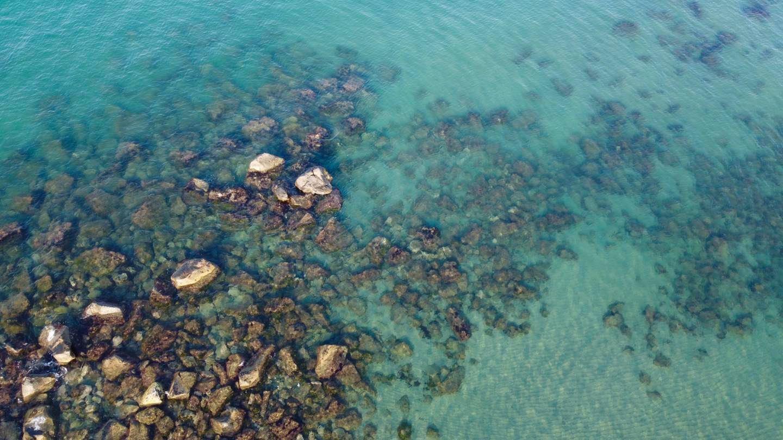 Il mare di Ostia è in salute