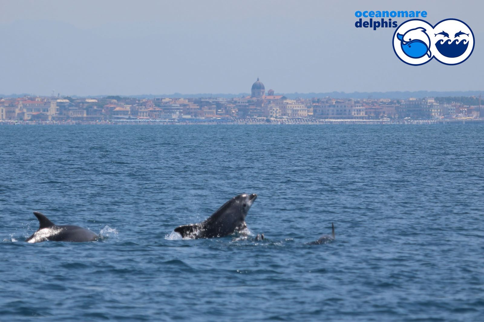 I delfini a Ostia: ormai una certezza, studiata dai biologi di Oceanomare Delphis