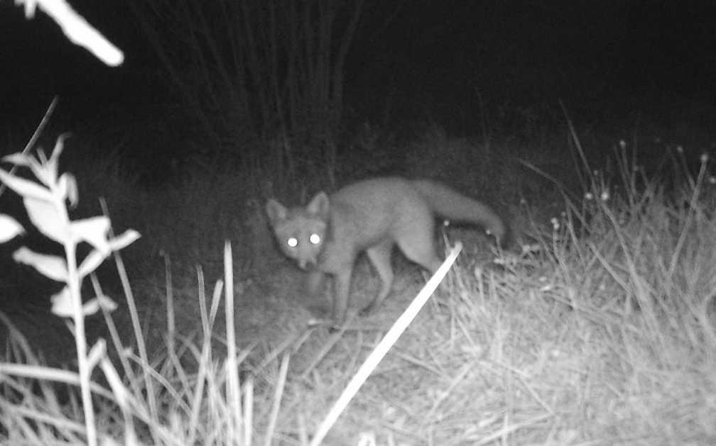 Progetto fauna: monitoriamo i nostri animali selvatici