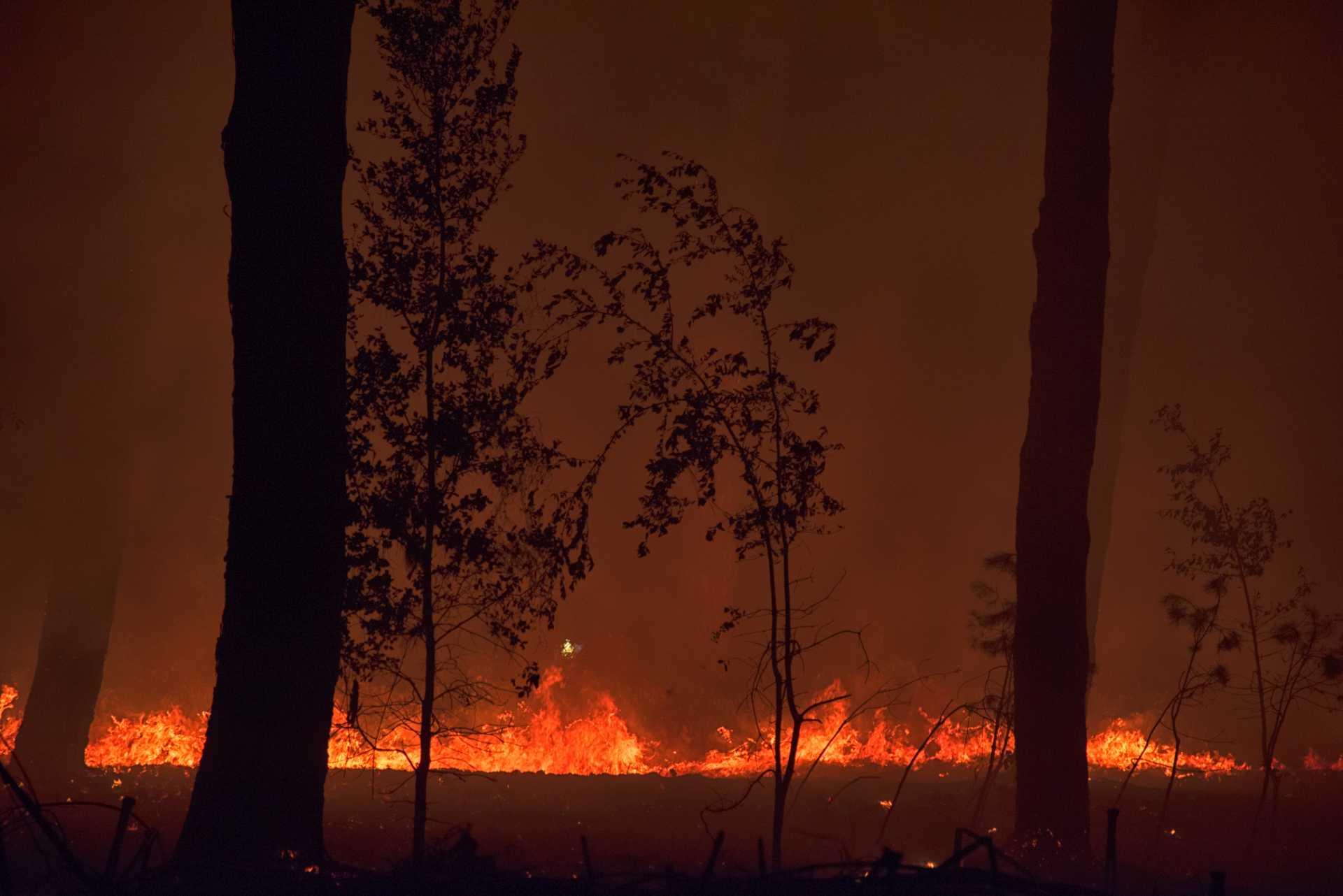 Incendio nella pineta delle Acque Rosse