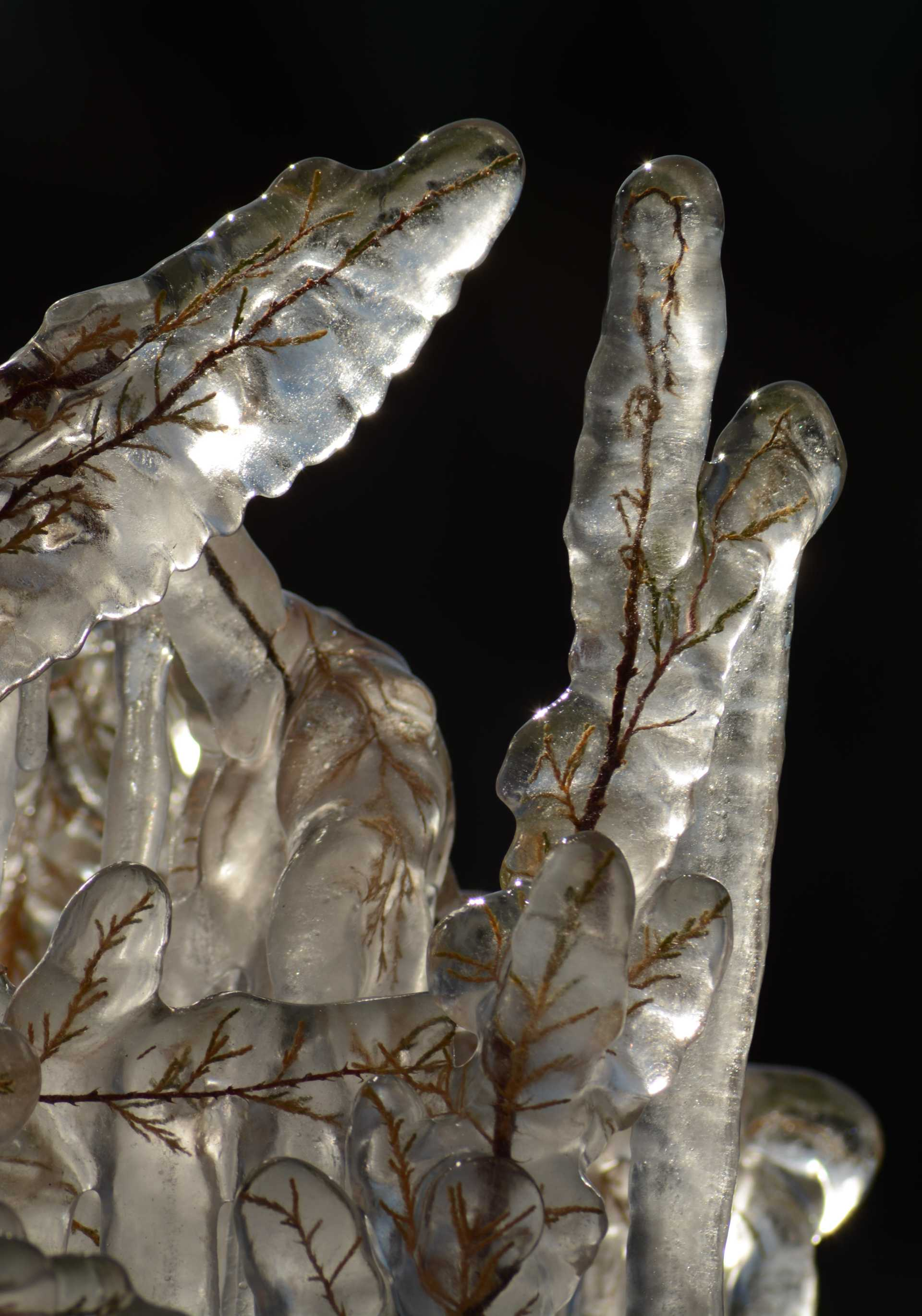 Il giardino di cristallo a Ostia