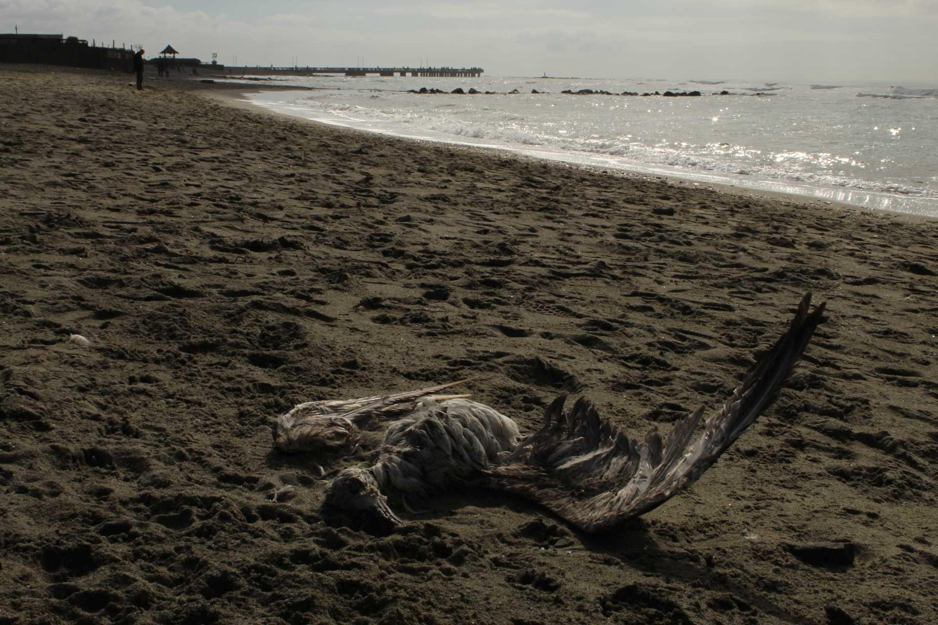 Federica Ranciaro: il litorale romano ha anche tanta voglia di rialzarsi