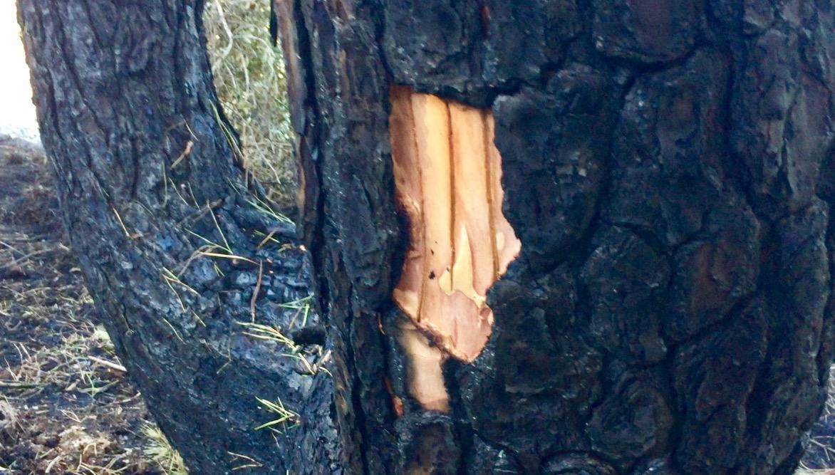 Incendio di Castelfusano a Ostia: capiamo qualcosa in più