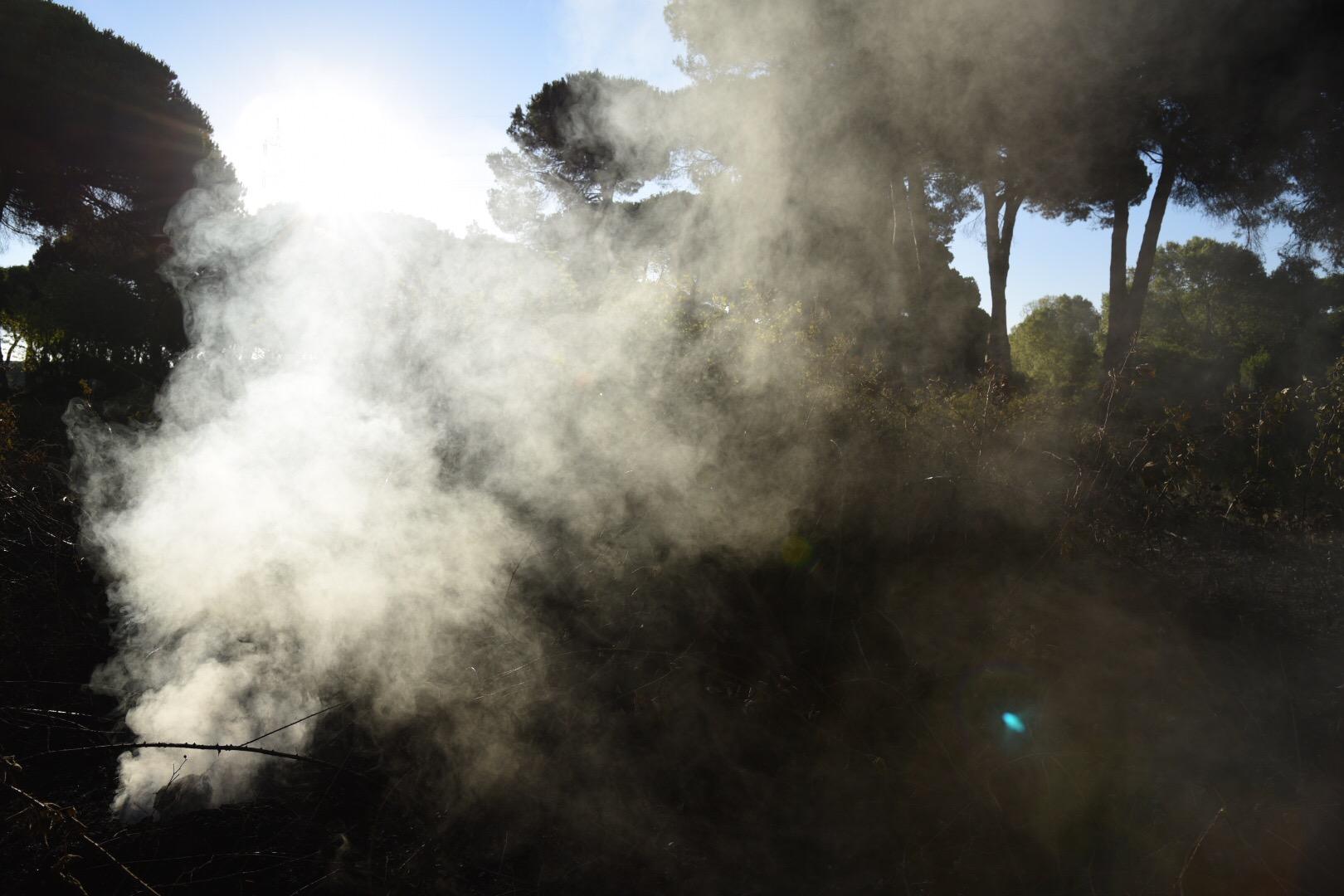 L'incendio della pineta delle Acque Rosse a Ostia: il giorno dopo