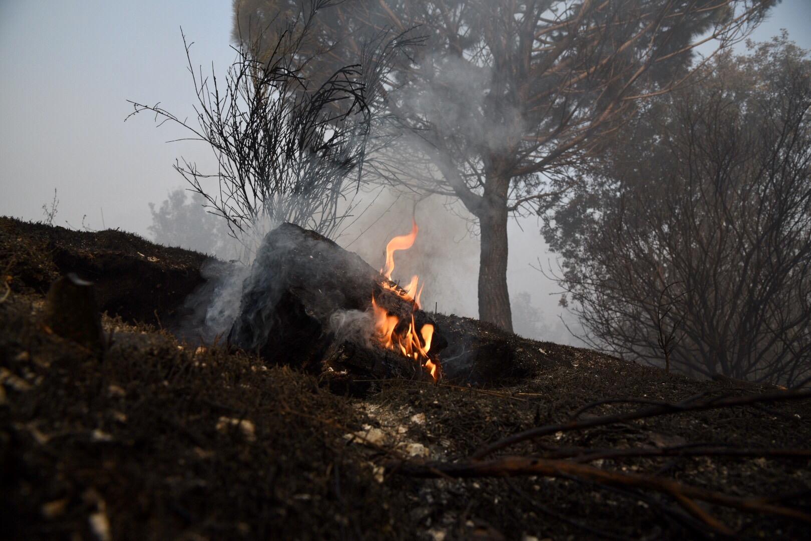 Non smette di bruciare nella pineta di Castelfusano