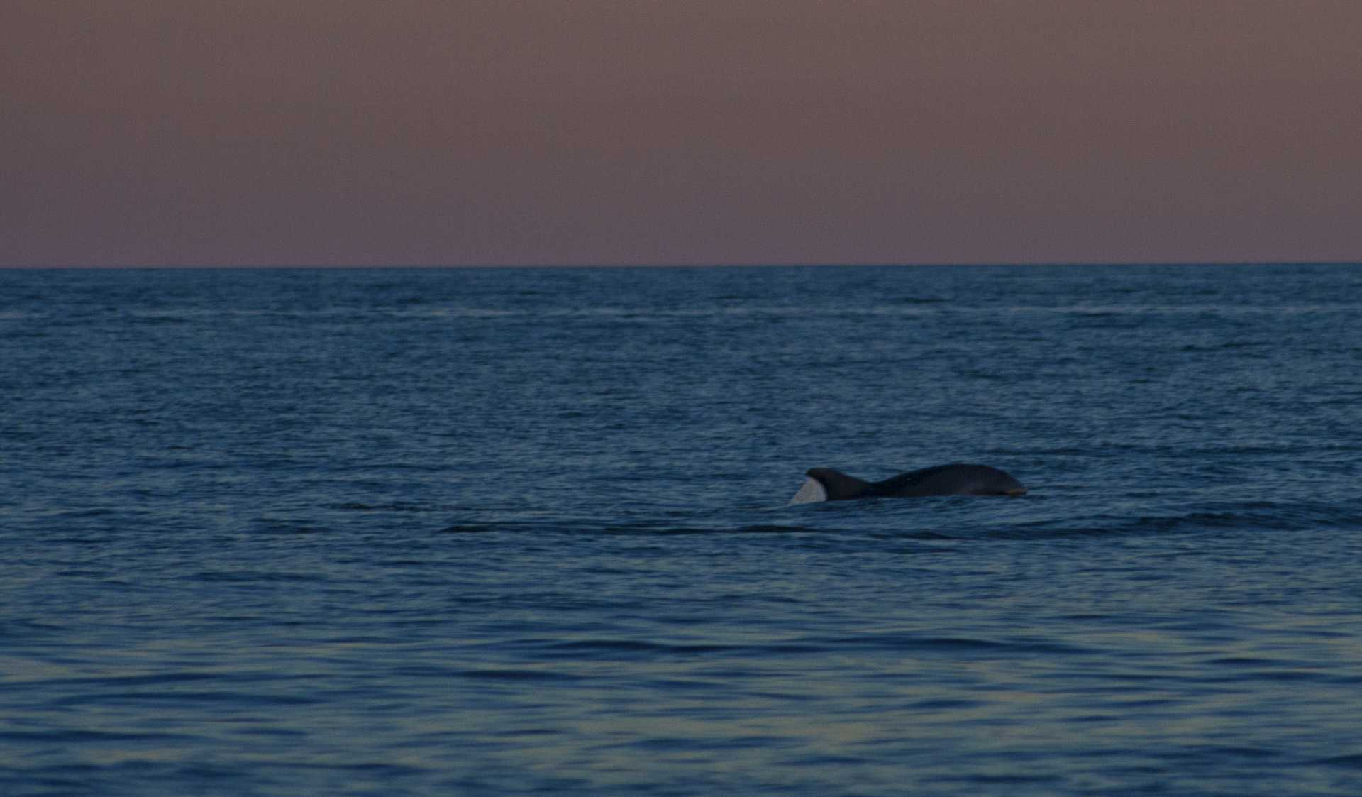 Tramonto col delfino